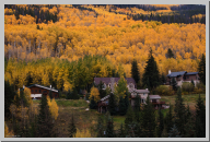 Vail Colorado - Aspen Trees - 10.jpg
