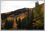 Vail Colorado - Aspen Trees - 09.jpg