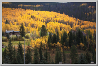 Vail Colorado - Aspen Trees - 08.jpg