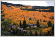 Vail Colorado - Aspen Trees - 07.jpg