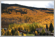 Vail Colorado - Aspen Trees - 06.jpg