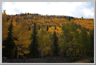 Vail Colorado - Aspen Trees - 05.jpg