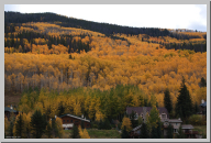 Vail Colorado - Aspen Trees - 04.jpg