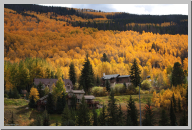 Vail Colorado - Aspen Trees - 03.jpg