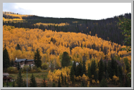 Vail Colorado - Aspen Trees - 02.jpg