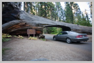 Driving in Sequoia National Park 5.jpg