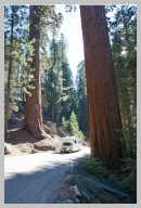 Driving in Sequoia National Park 3.jpg