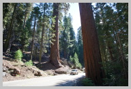 Driving in Sequoia National Park 1.jpg