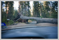 Driving in Sequoia National Park 4.jpg