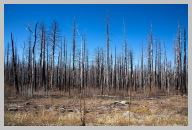 Forest After Fire on the way to the North Rim.jpg